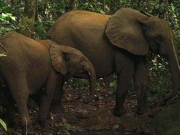 Google Cloud | Elephants Animals